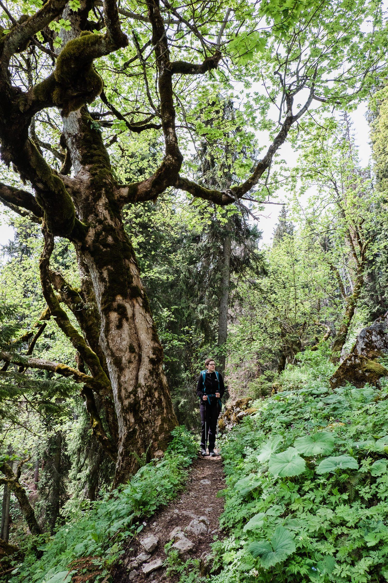Linderhof Wandern