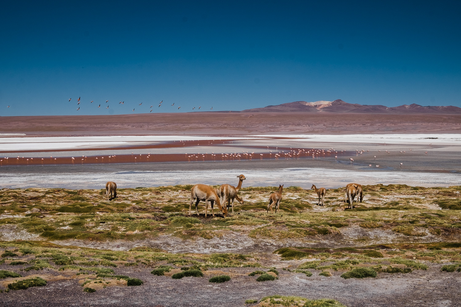 Backpacking in Bolivien