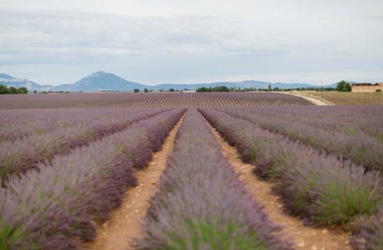 Valensole Lavendelfelder