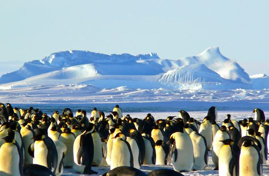 antarktis reisen günstig