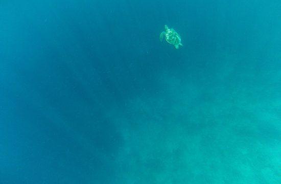 Unterwasserschildkröten sehen auf Gili Air